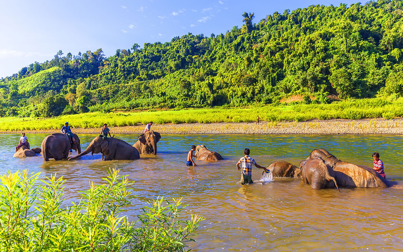 Participate in daily care for elephants in Kalaw.