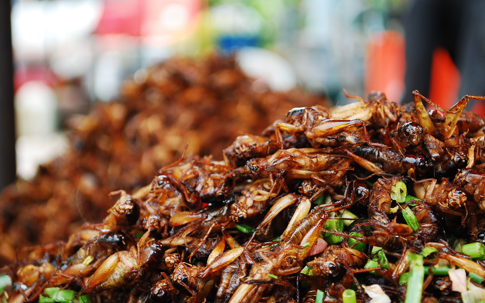 Fried Cricket mandalay